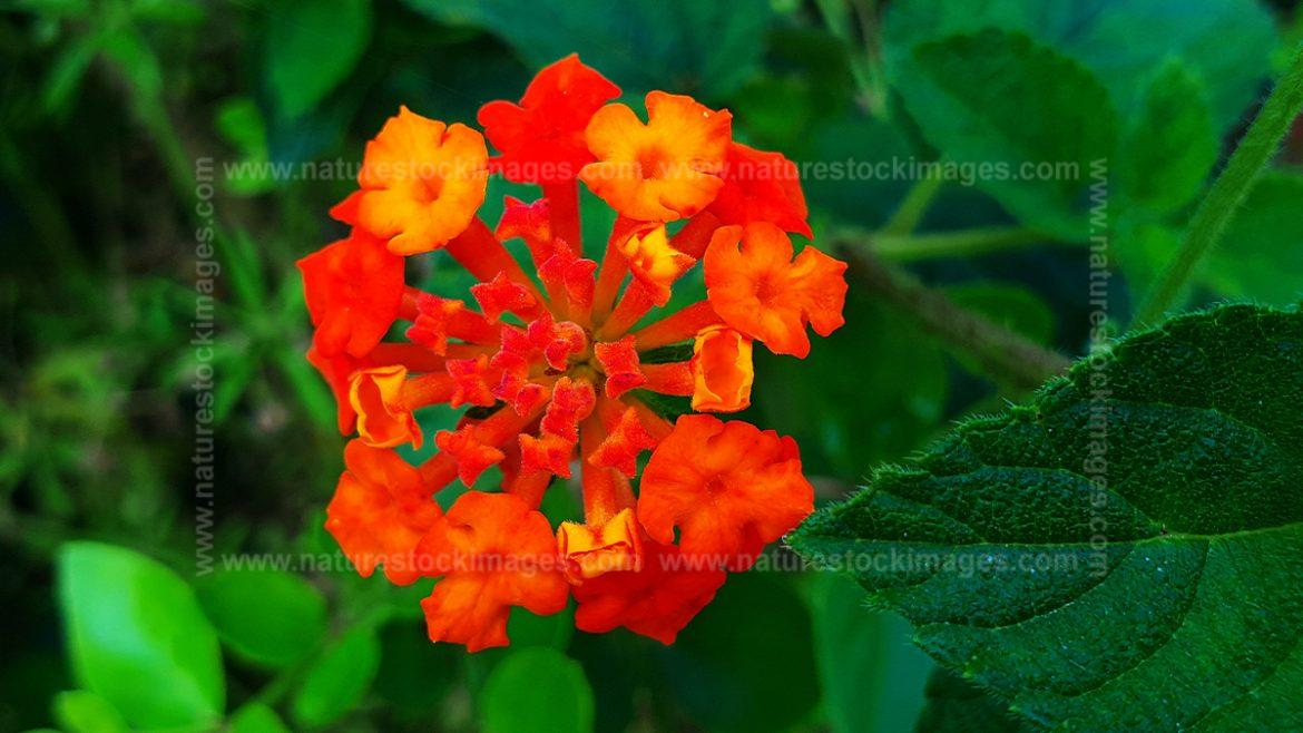 Jungle Red Flowers