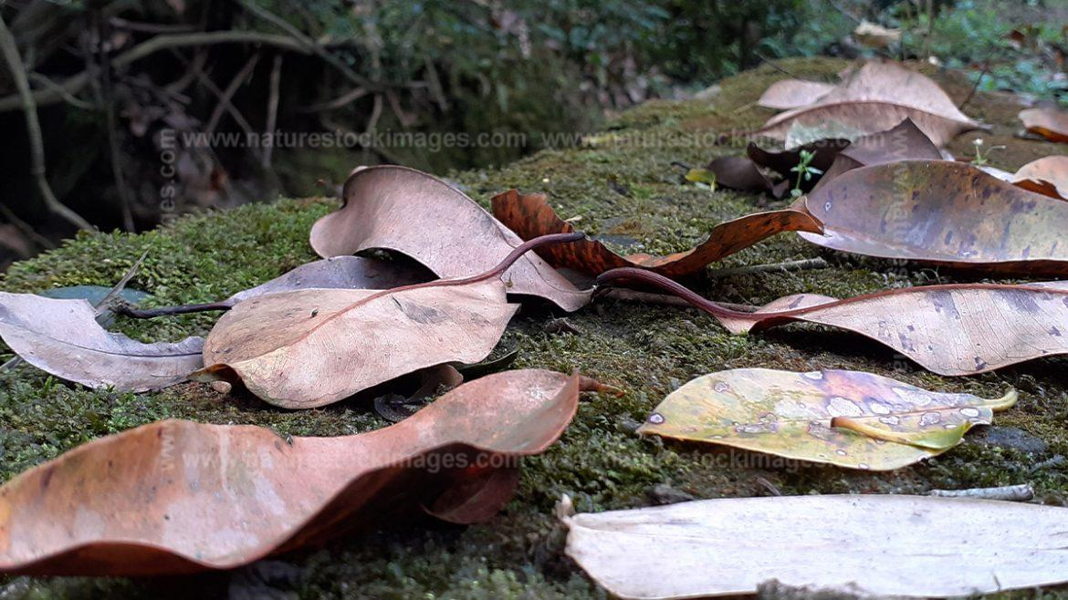 Leaves In Jungle