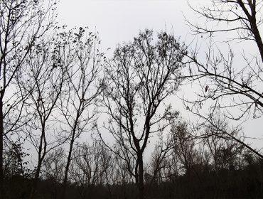 Trees Images